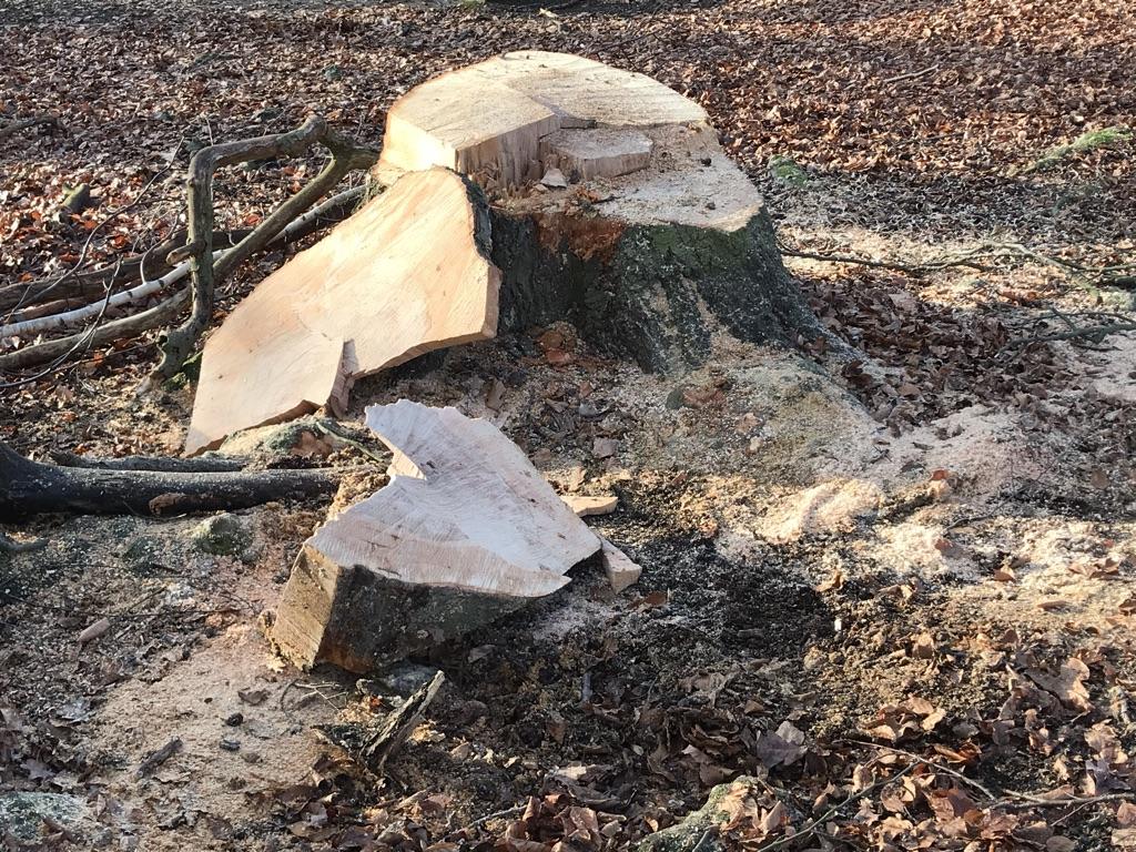 Detmolder Politik stimmt gegen Baumschutzsatzung